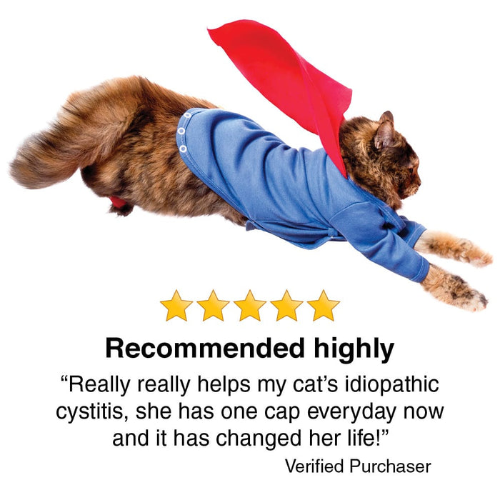 Transforme Cystassist customer review, 5 stars, really helps with my cat's idiopathic cystitis, image of cat with a cape jumping