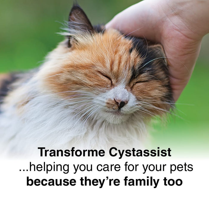 Cat, eyes closed, enjoying a head rub. Text says, Transforme Cystassist ...helping you care for your pets because they're family too.