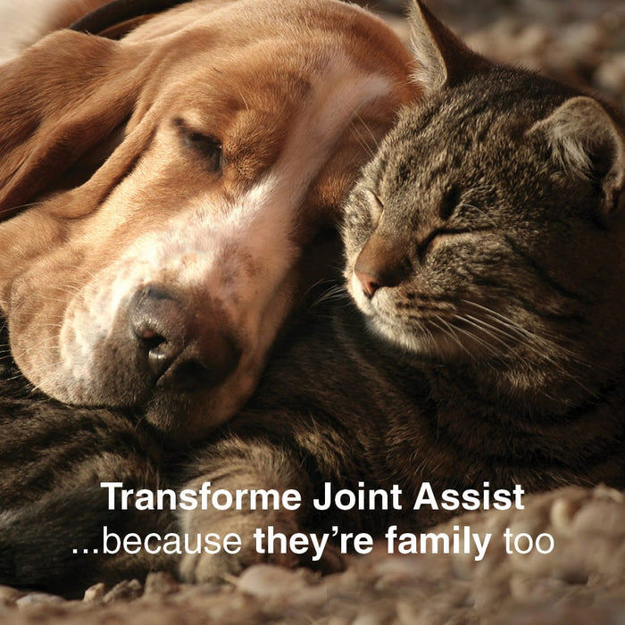 Dog and cat sleeping together, text says, Transforme Joint Assist ...because they're family too