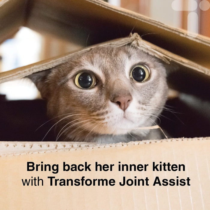 Mischievous cat peeping out of a box, text says, Bring back her inner kitten with Transforme Joint Assist