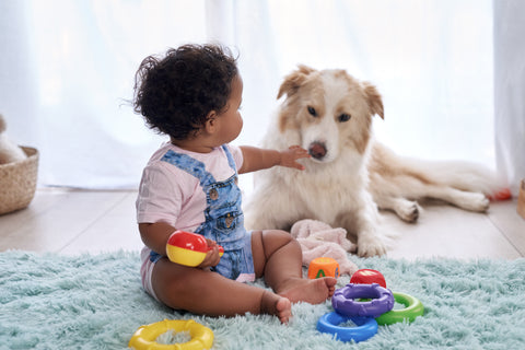 How To Introduce a New Baby to Your Dog