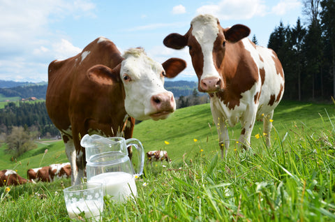 Is Goat Milk Formula Healthier Than Cow's Milk Formula?