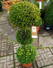 Load image into Gallery viewer, Buxus 3 Stem