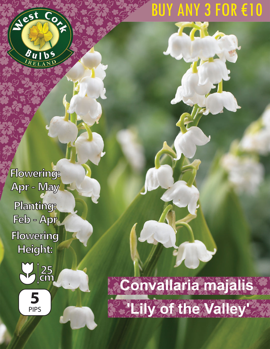 Convallaria majalis 'Lily of the Valley'