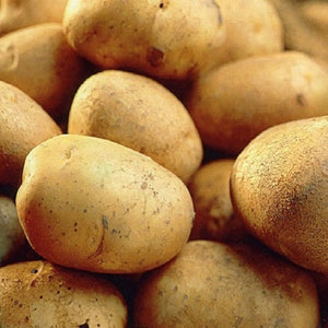 Record Main Crop Seed Potatoes 2kg