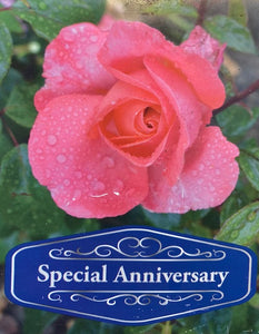 Hybrid Tea Rose Special Anniversary