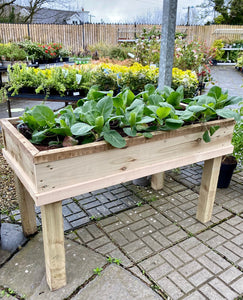 Raised Veg Box