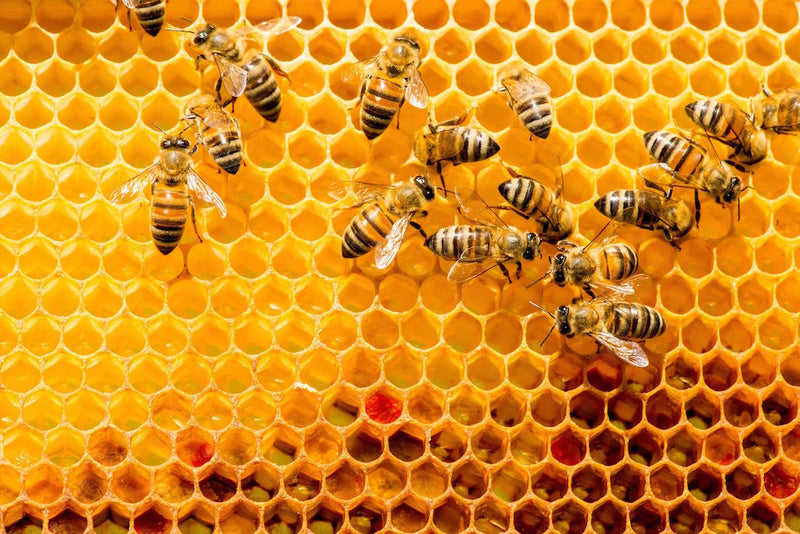 honey industry significant to health and wellness