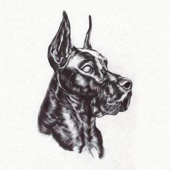 Great Dane - Alpha Dog (LP) Dome Of Doom