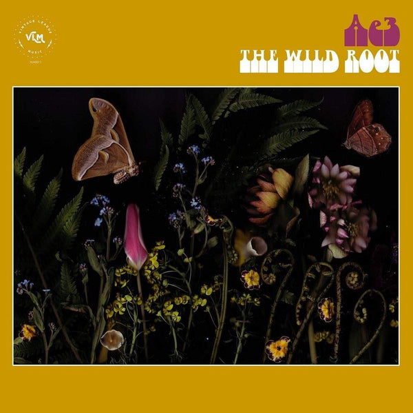 Ae3 (Alan Evans Trio) - The Wild Root (CD) Vintage League Music