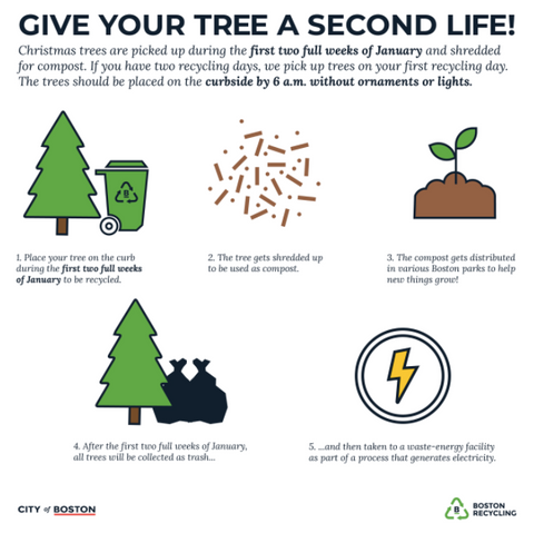 Boston Christmas tree recycle infographic