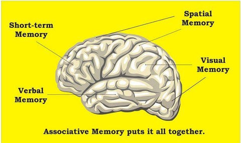 memory booster supplements