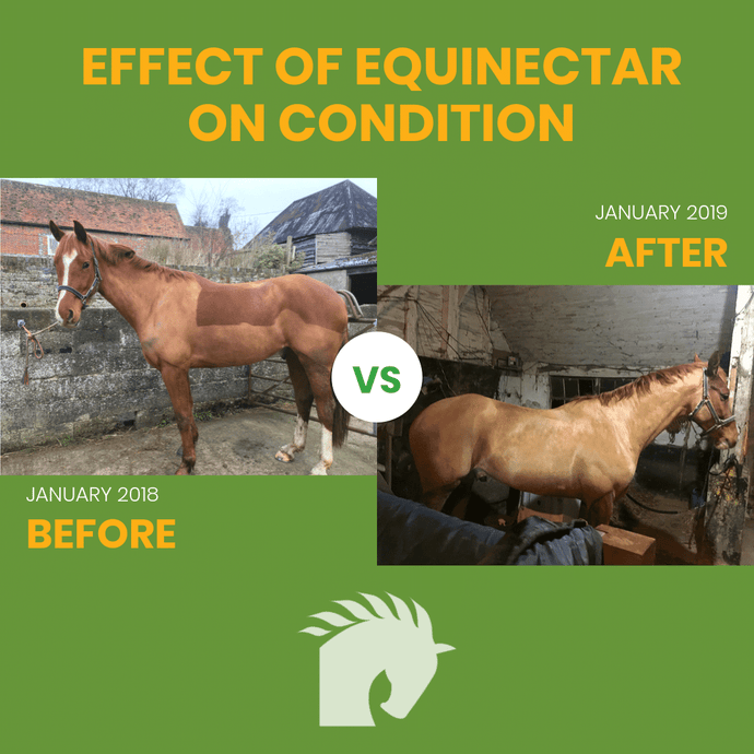 EquiNectar - Before & After - Benefits and Photos