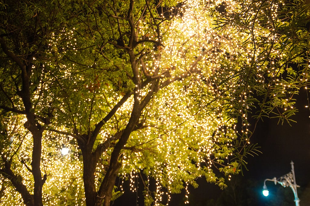 Tree canopy with LED string lights