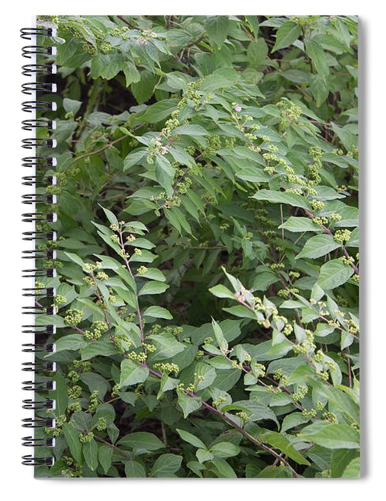 Bush - Spiral Notebook