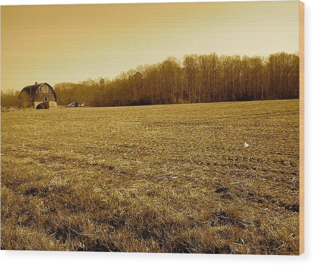 Farm Field With Old Barn In Sepia - Wood Print