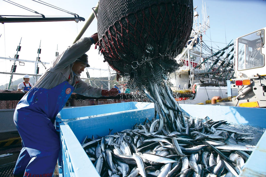 PRODUCER SPOTLIGHT: Senrei - The Small Town Japanese Fishery Transforming the Global Fishing Industry