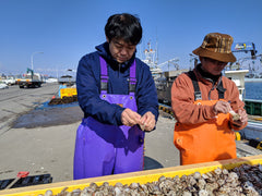 One Day as a Scallop Farmer: The good, the smelly, and the yummy!