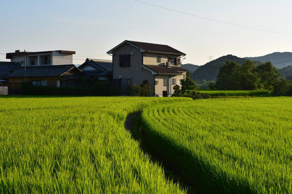 Can the Slow Life Catch Up? Japan's Struggling Agricultural Industry