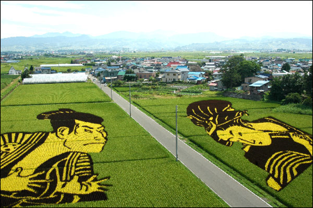 A Brief History of Rice in Japan