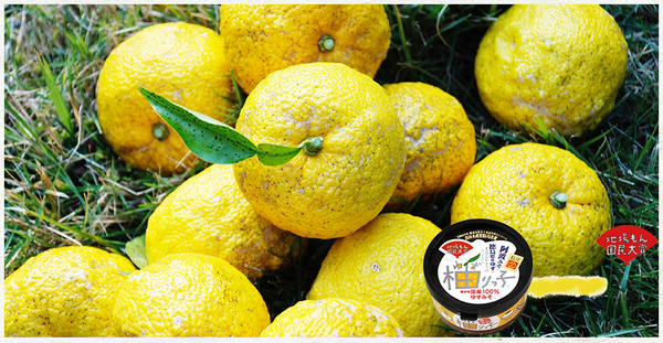 Yuzu Japanese citrus fruit