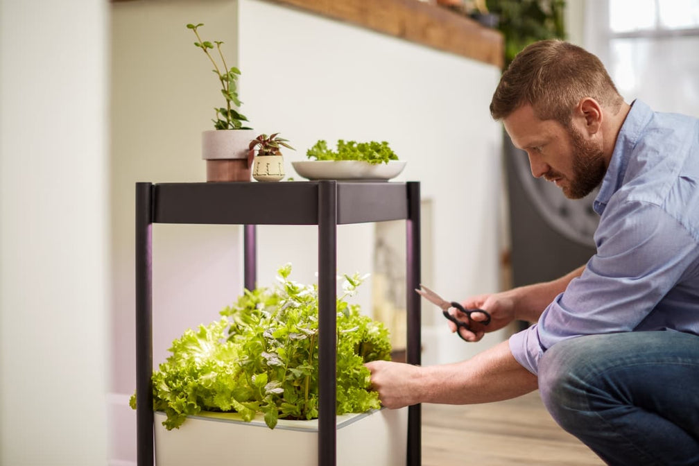 How to Harvest Greens & Herbs Grown in the Miracle-Gro® Twelve™ Indoor Growing System
