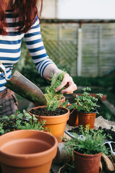 Live in an Apartment? Here's How to Start Your Own Herb Garden