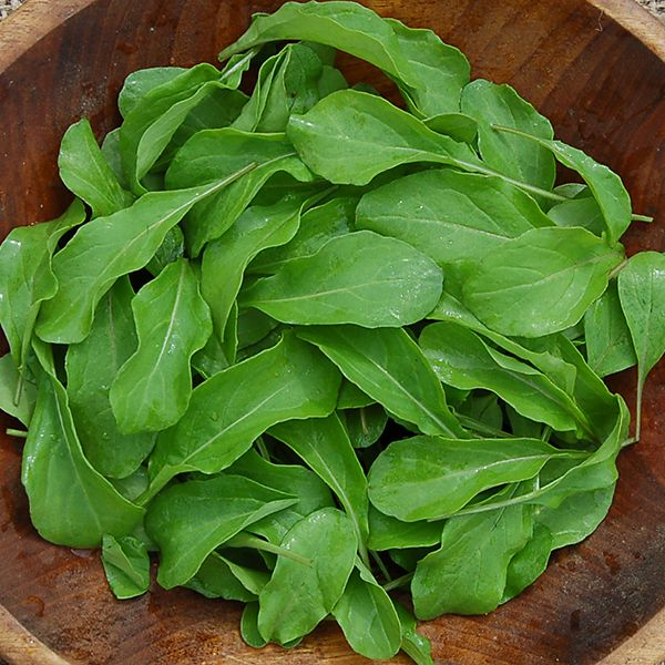 Astro Arugula - High Mowing Organic Seeds