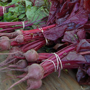 Bull's Blood Beet - High Mowing Organic Seeds