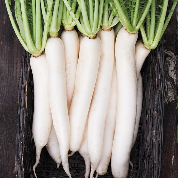 Daikon Radish - High Mowing Organic Seeds