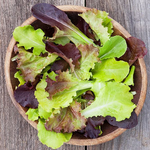 Gourmet Blend Lettuce - High Mowing Organic Seeds