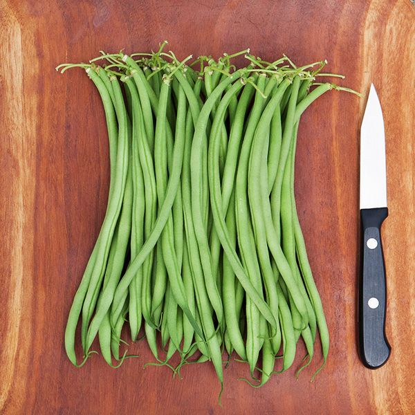 Maxibel Haricot Vert Bush Bean - High Mowing Organic Seeds