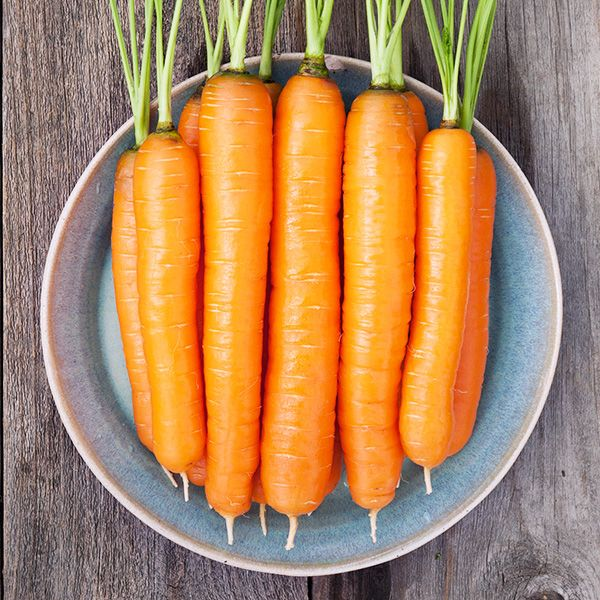 Napoli Carrot - High Mowing Organic Seeds
