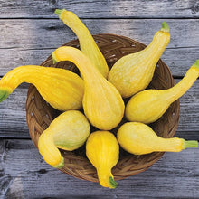 Load image into Gallery viewer, Yellow Crookneck Summer Squash - High Mowing Organic Seeds