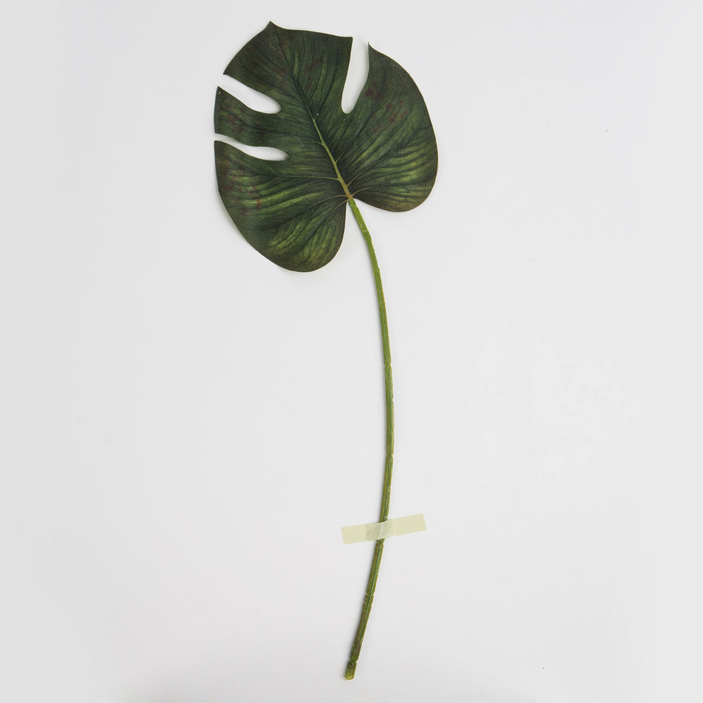 Monstera mellan - By Faux