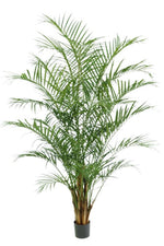 Areca palm - By Faux