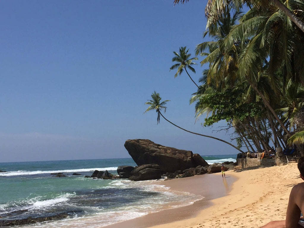 Wijaya Beach - Sri Lanka - Palm Trees on Beach