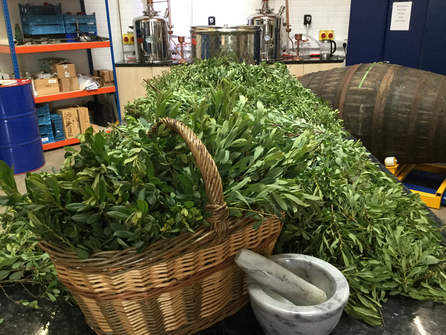 Bog Myrtle, a key craft gin botanical.
