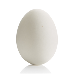 Large Egg Party Animal