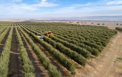 Aerial photo of an olive harvest at La Panza Ranch