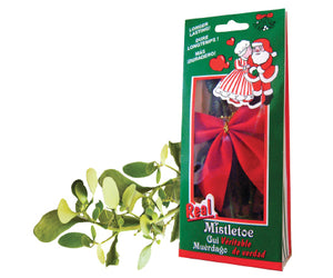 Real Mistletoe