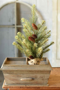 Black Hills Pine Tree w/Burlap Base | 2'