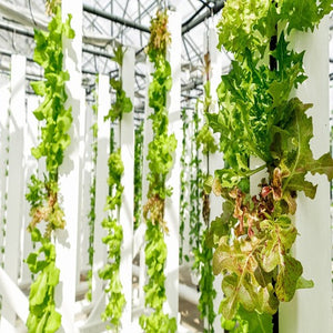 Commercial Greenhouse Grower