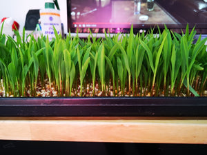 ZipGrow™ DIY Microgreens Station - Base Kit
