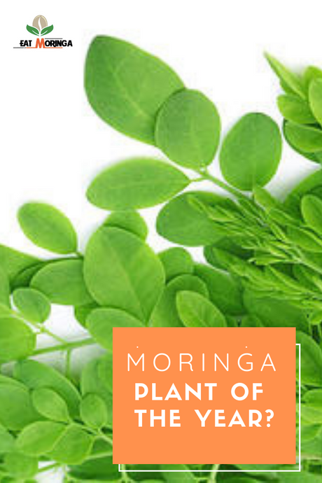 Why was Moringa an internationally recognized 'plant of the year'?