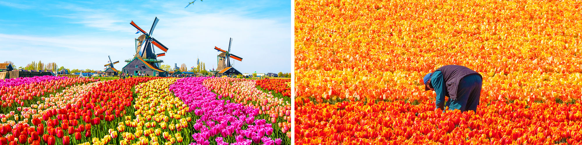 Fine Art Photography Prints of Dutch Tulips - Satellite Images of Earth - Point Two Design