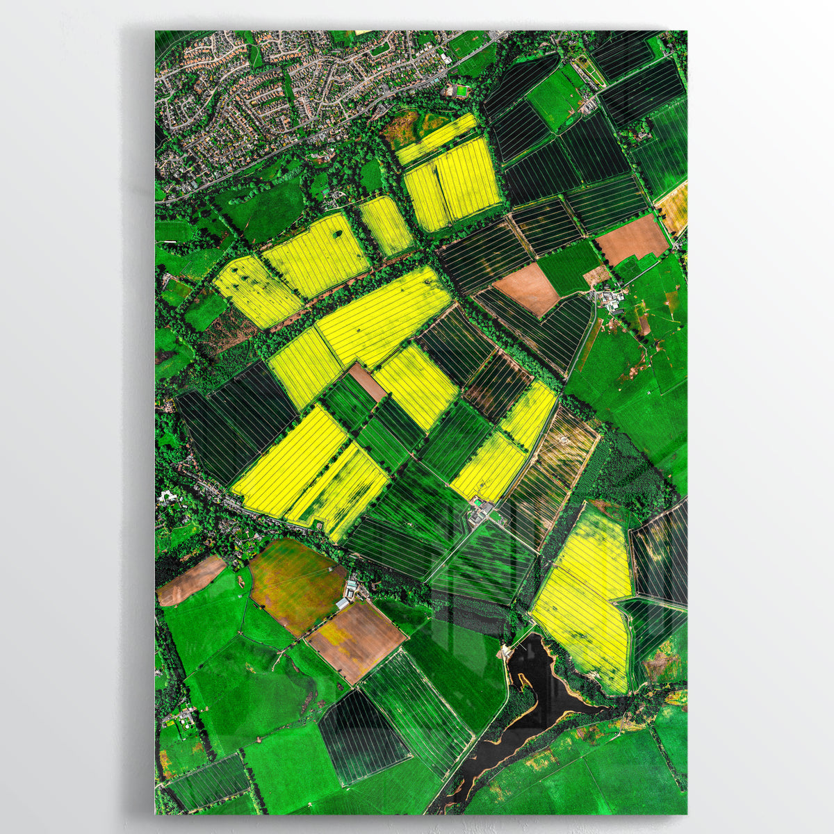 Canola Fields Earth Photography - Floating Acrylic Art - Point Two Design