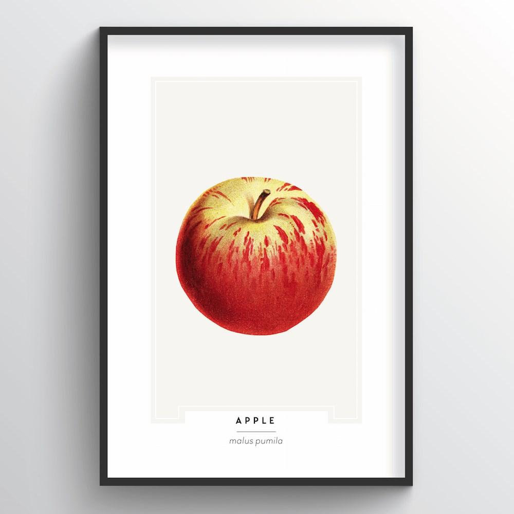 Apple Botanical Art Print - Point Two Design