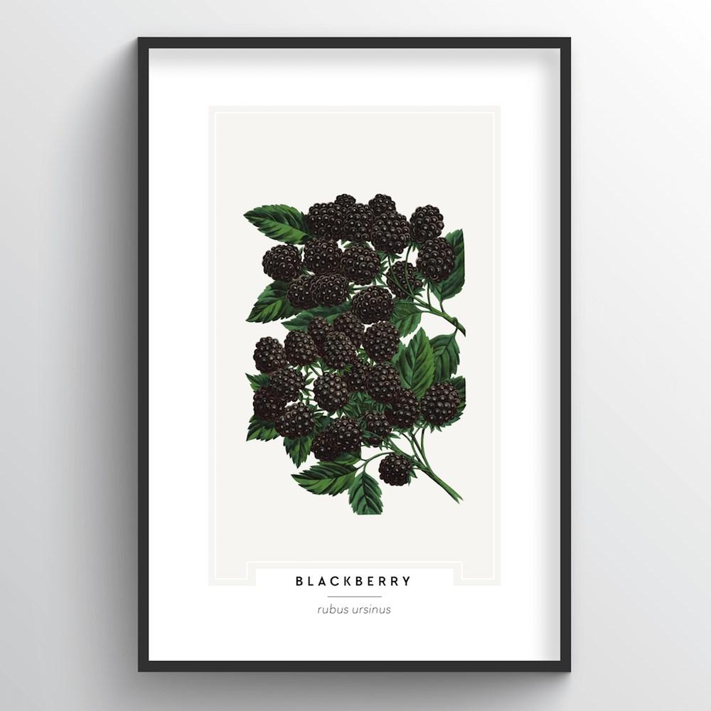 Blackberries Botanical Art Print - Point Two Design