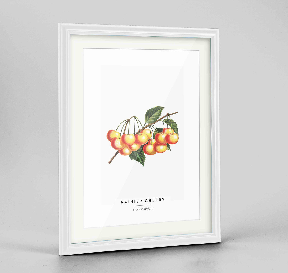 Cherries Botanical Art Print - Framed
